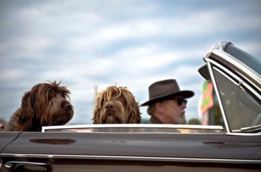 Cestujete se psem? A poznáte, když mu není dobře?
